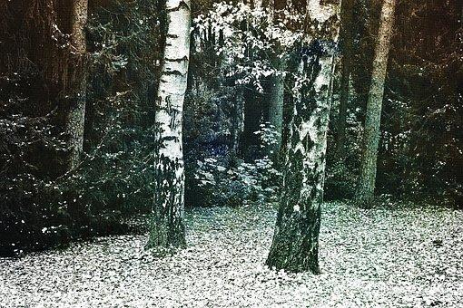 Birch, Log, Trees, Bark, Pine, Nature, Tribe, Landscape