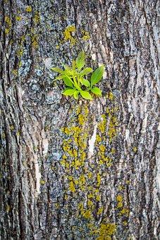 Tree, Bark, Moss, Growth, North, Nature, Plant