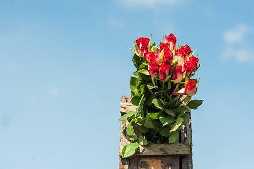 Bouquet Of Roses, Flamed, Bird Box, Sky, Blue