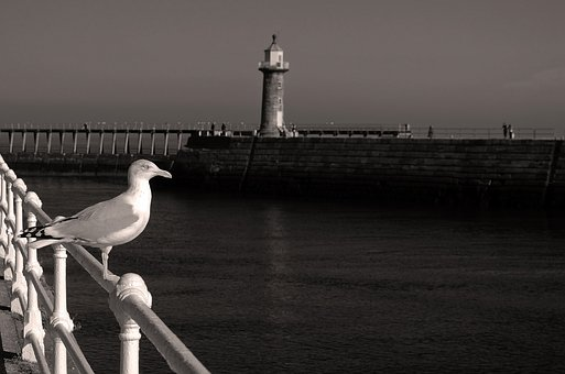 Animals, Background, Beak, Birds, Sea, Water, Coast