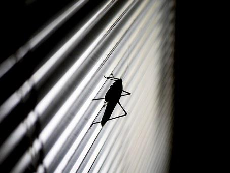 Grasshopper, Silhouette, Blinds, Black, Nature, Animal