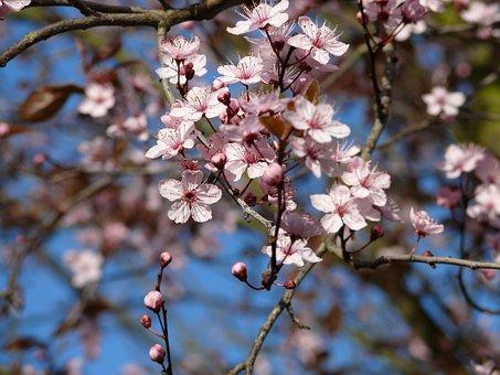 Blossom, Garden, Nature, Spring, Bloom, Blue Sky