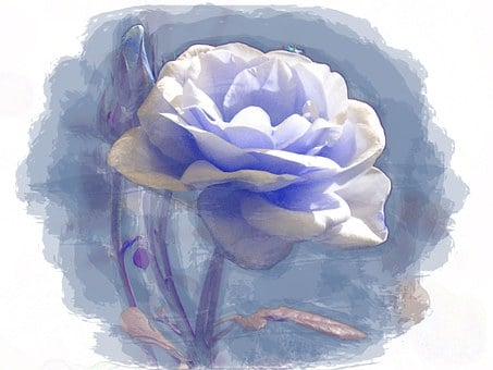 Blue, Rose, Digital, Painting, Flower