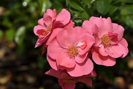 Vibrant, Flowers, Floral, Botanical, Garden, Nature