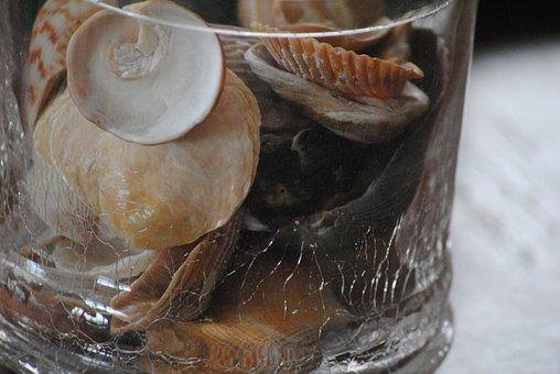 Seashells, Glass, Container, Sea, Summer, Beach, Travel