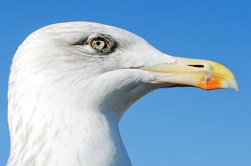 Animals, Background, Beak, Birds, Day, Dynamic