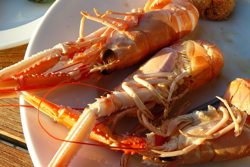 Lobster, Nephrops, Delicious, Crustaceans, Fishing