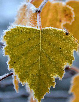 Frost, Autumn, Birch Leaf, Nature, Hoarfrost, Frozen