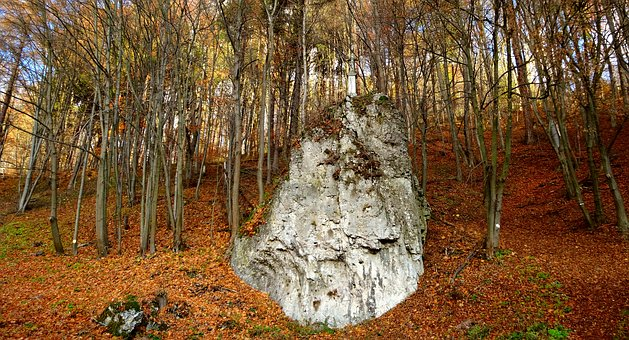 Paternity National Park, Poland, Landscape, Autumn