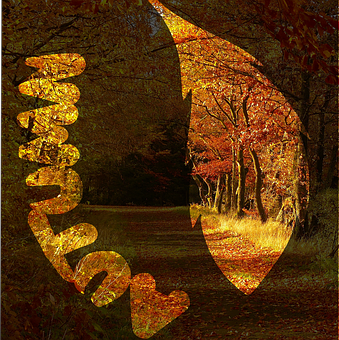 Autumn, Fall Leaves, Autumn Forest, Leaf Outline