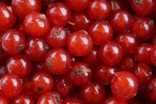 Currants, Many, Mass, Quantitative, Sour, Garden, Fruit