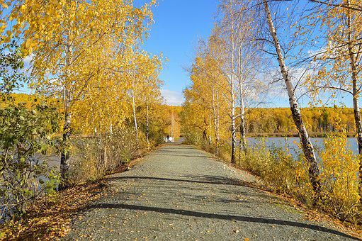 Autumn, Forest, Yellow Forest, Blue Sky, Trail, Nature