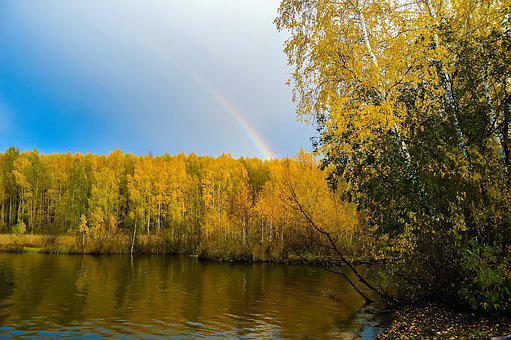 Autumn, Forest, Yellow Forest, Blue Sky, Nature