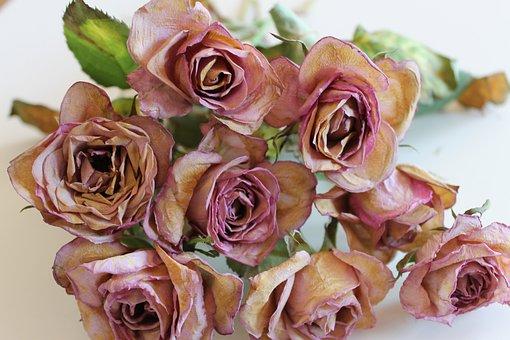 Flowers, Roses, Ros, Scre, Garden, Flower, Summer