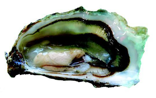 Oyster, Oysters, Seafood, Charente-maritime