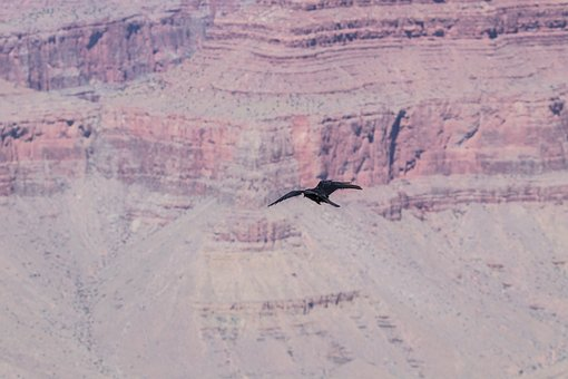 Canyon, Mountains, Arizona, Bird, Flight, Air, America