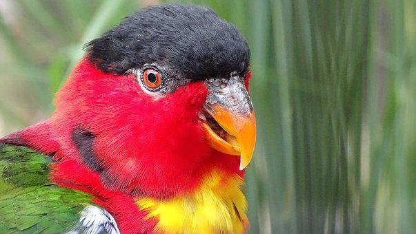 Animal, Bird, Birds, Parrot, Bill, Feather
