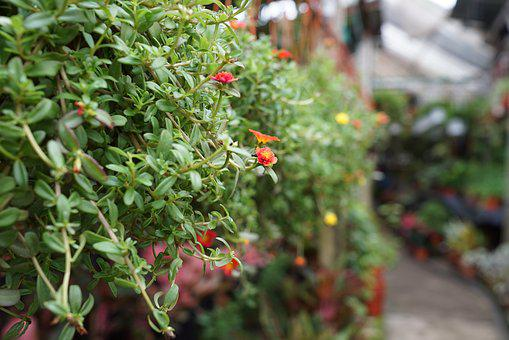 Potted Plants, Small Flowering, Plant Nursery, Blooming