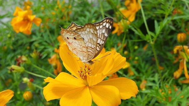 Butterfly, Braun Wings, Yellow, Flowers