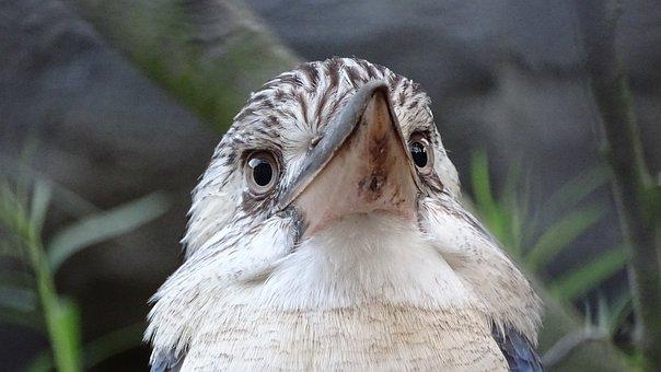 Animals, Birds, Australia, New Guinea, Cover Reads