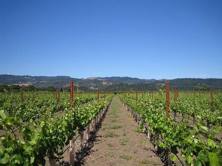 Winery, Wine, Field, Drink