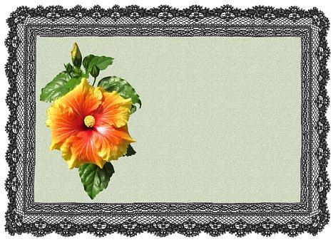 Greeting Card, Hibiscus, Flower, Lace, Frame