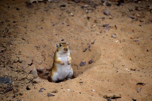 Desert, Animal, Nature, Wild, Wildlife, Travel, Mammal