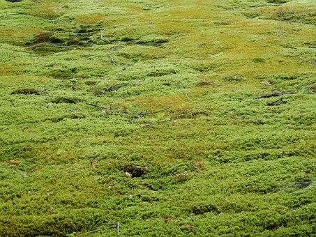 Moss, Moss Carpet, Green, Texture, Nature, Plant