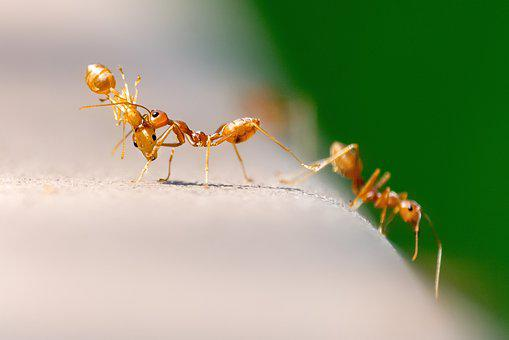 Ants, Nature, Insect, Macro, Small, Natural, Sting