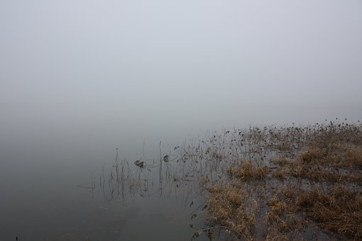 Winter, Water, Fog, Lake, Nature, Schielf, Bank, Grey