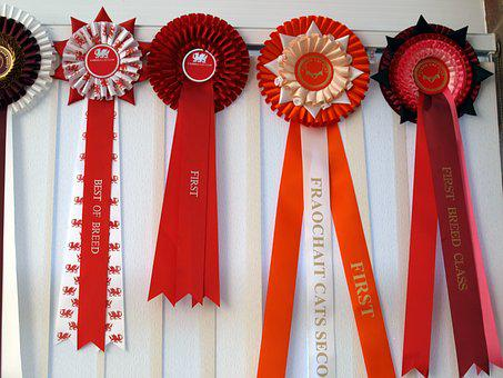 Rosettes, First, Prize, Cat Show