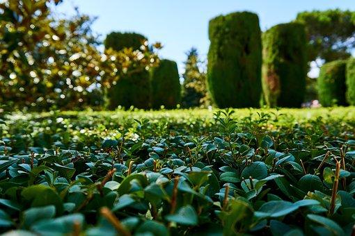 Garden, Green, Hedge, Botanical Garden, Nature