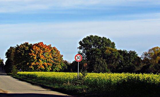 Meadow, Autumn, Lupine, Field, Nature, Landscape, Grass