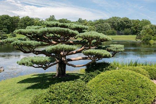 Japanese Garden, Chicago Botanic Garden, Garden