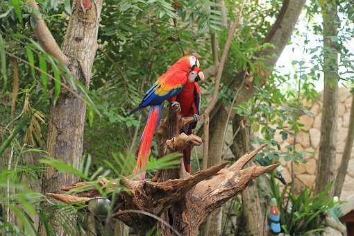 Parrot, Scarlet Macaw, Ave, Macaw, Bird, Zoo, Nature