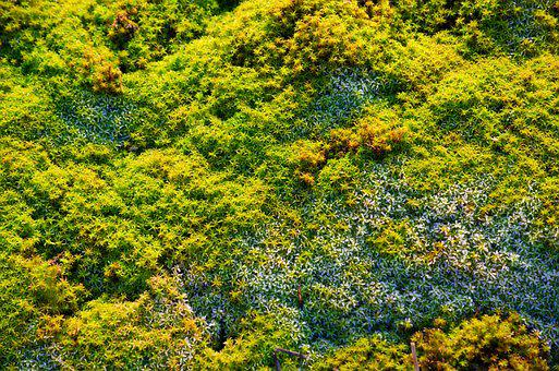 Moss, Macro, Close, Nature, Fouling, Forest, Green