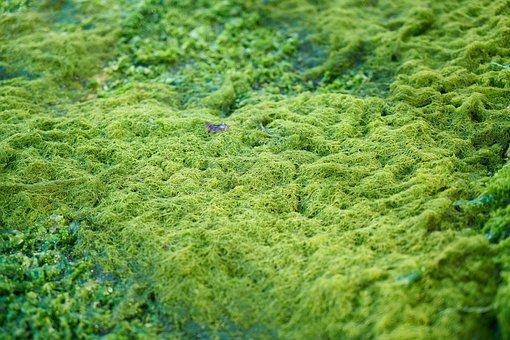 Green, Moss, Texture, Live, Marine, Moist, Day, Nature