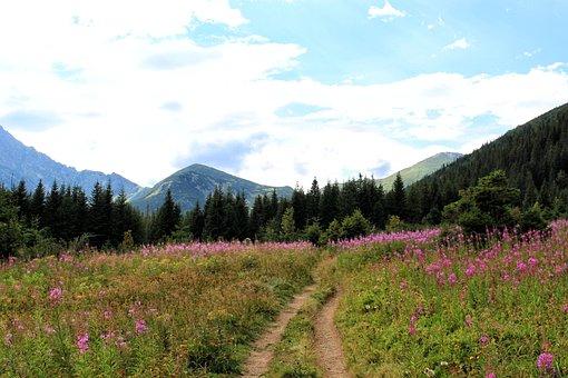 Tatry, Way, Flowers, Mountains, Polyana, Summer