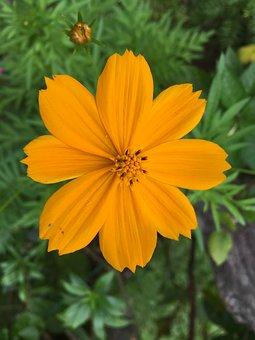 Flower, Nature, Floral, Plant, Garden, Trumpet, Stans