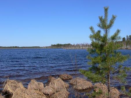 Lake, Nizhny Novgorod Oblast, Forest, Water, Nature