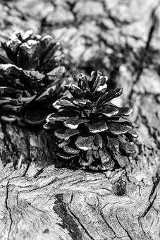 Pinecone, Black And White, Nature, Macro, Decorative