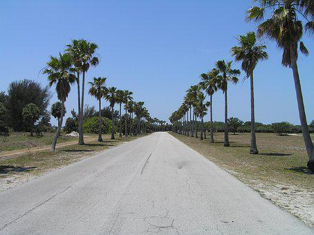 Palm Trees, Tropical, Straight Ahead, Road, Florida