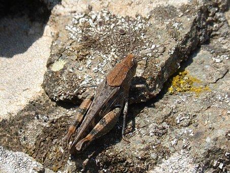 Grasshopper, Lobster, Texture, Rock, Lichen, Camouflage