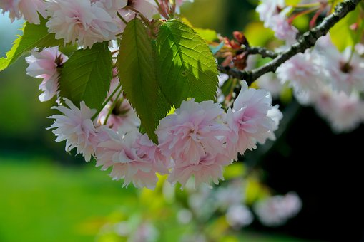 Spring, Flower, Tree, Nature, Sprig, Flowering, Sunny