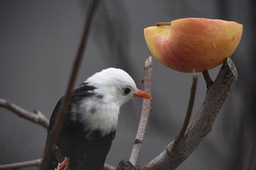 Birds, Parrot, Apple, Zoo, White, Head, Close-up