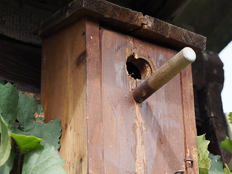 Aviary, Nesting Box, Bird Feeder, Tree, Garden