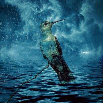 Bird, Hummingbird, Animal, Climate Change, Flood