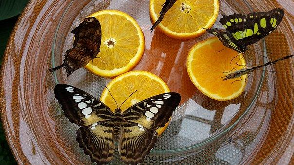 Butterfly House, Butterflies, Mainau Island, Butterfly