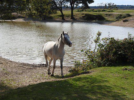 Pony, Horse, Animal, Wild, White, Countryside, Mare