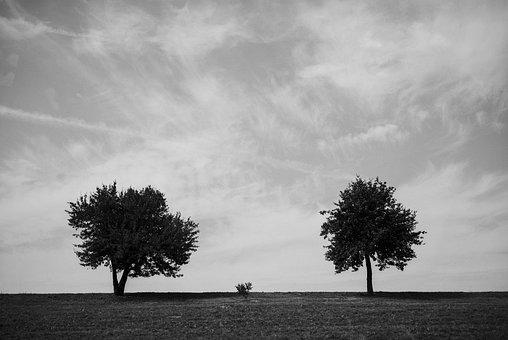 Trees, Monochrome, Minimal, Landscape, Design, Nature